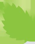 Leaf_1